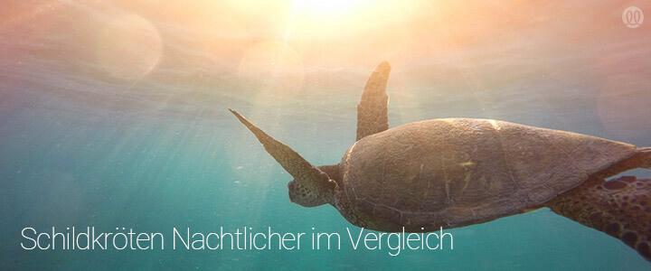 Featurebild - Schildkrötennachtlichter